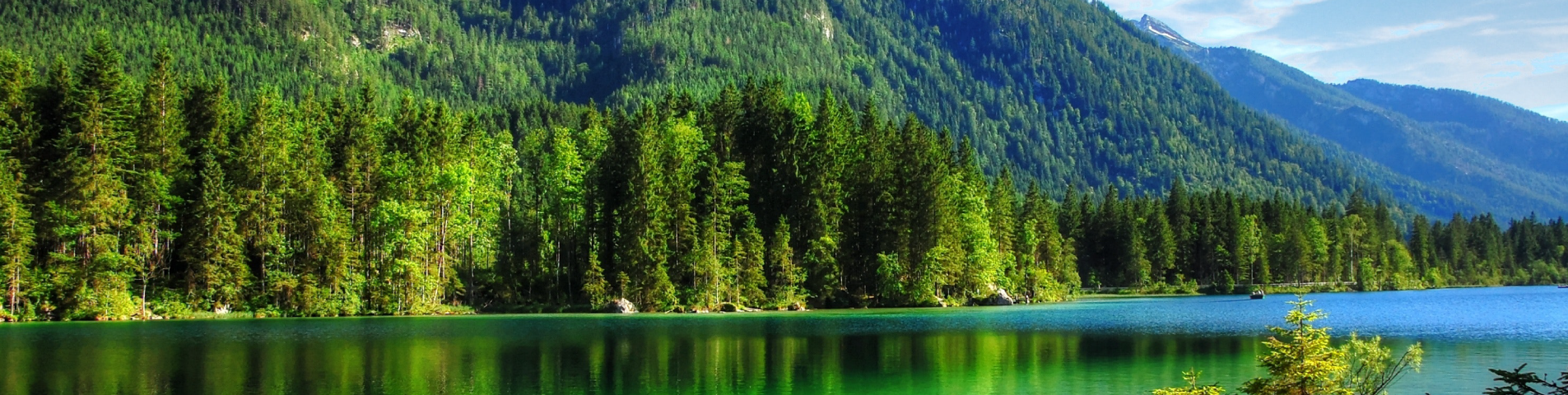 header-images-forest2